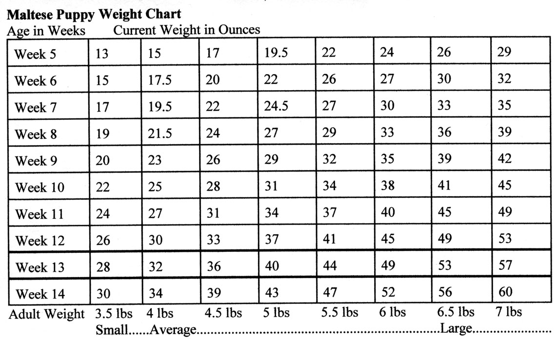 German shepherd weight chart weeks dogs our friends photo blog german shepherd weight chart weeks nvjuhfo Choice Image